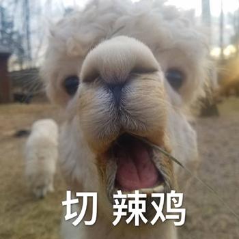 沙雕动物搞笑表情包 沙雕动物图片表情(1)